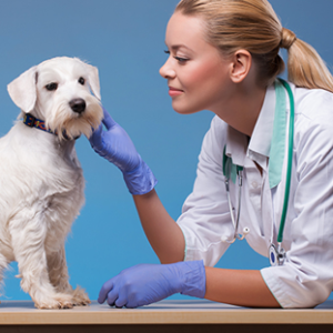 Veterinary Nursing Course