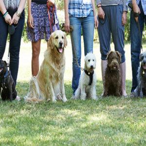 Pet Sitting & Dog Walking Diploma