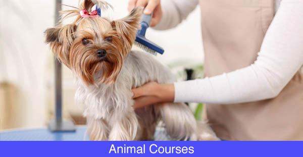 Animal-Courses